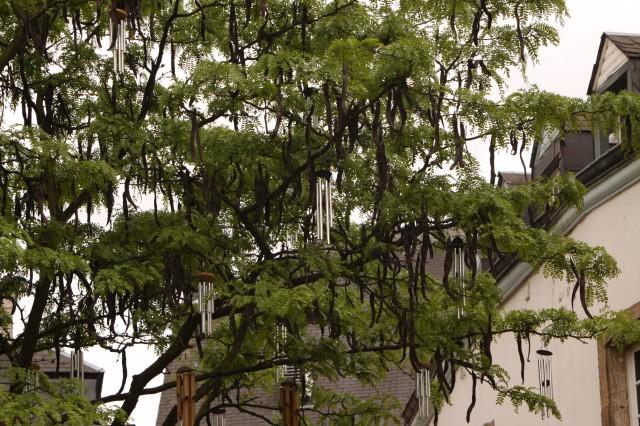 Люксемубрг дерево